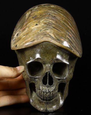 Ammonite Skull II