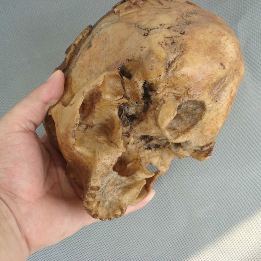 If you look closely at the underside of this skull, it sure doesn't look like a resin replica.